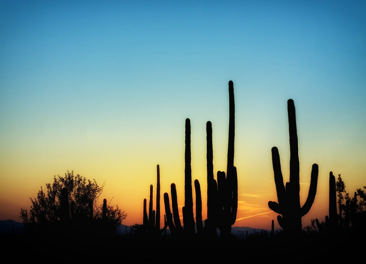 arizona, cactus, cacti